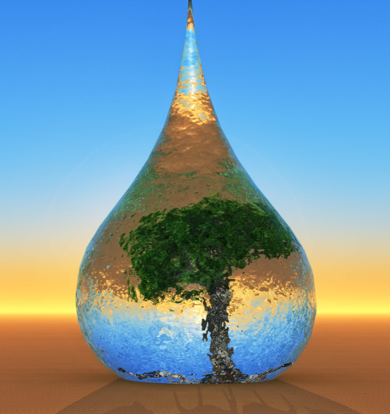 waterdrop-tree-inside
